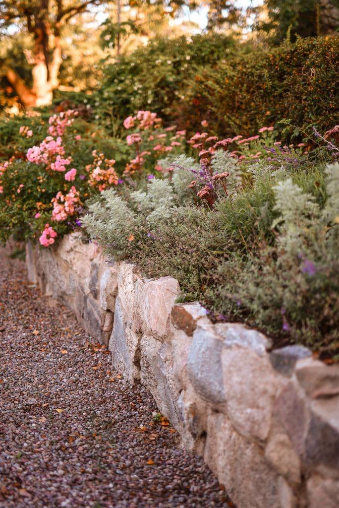 stenmur med växter